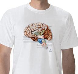 W41040_01_Anatomical-T-Shirt-Brain-L