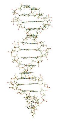 W19800_01_DNA-Model