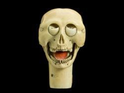 Skull-model