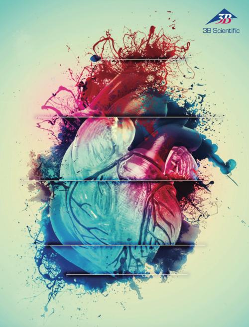 3B Scientific Heart Models