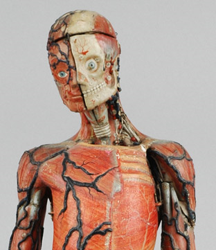 papier-mache anatomy model