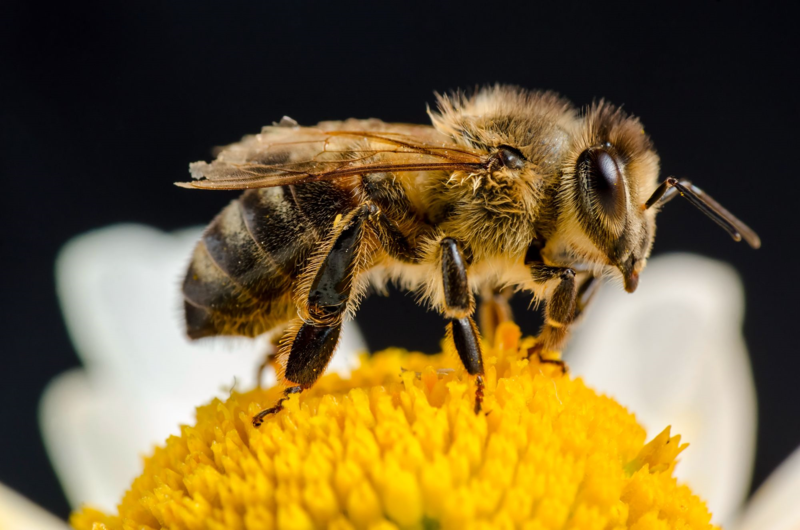 Are Bees Really Essential for Human Survival