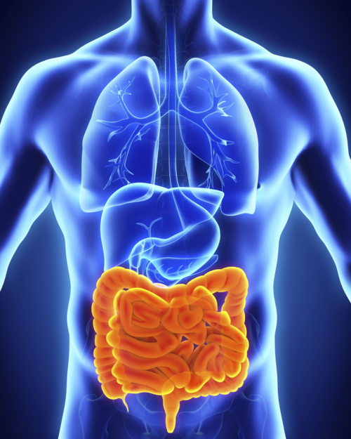 breakthrough treatments for crohn's disease - insights on therapy, Muscles